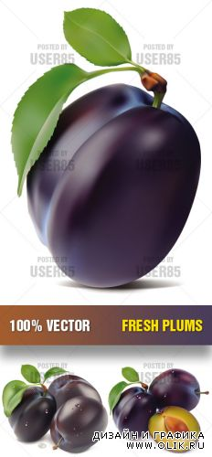 Stock Vector - Fresh Plums