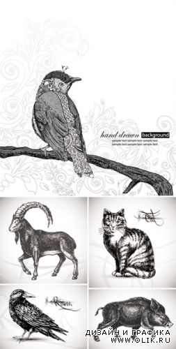 Hand Drawn Animals Vector