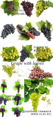 Stock Photo: Grape with leaves