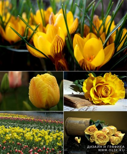 Tulips and Yellow roses - Clipart