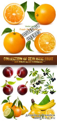 Stock Vector - Collection of Realistic Fruit