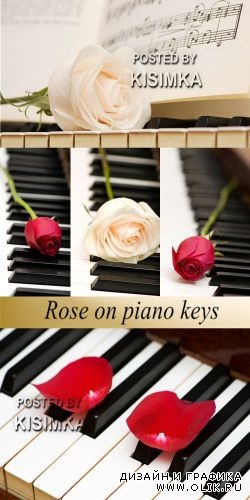 Stock Photo: Rose on piano keys