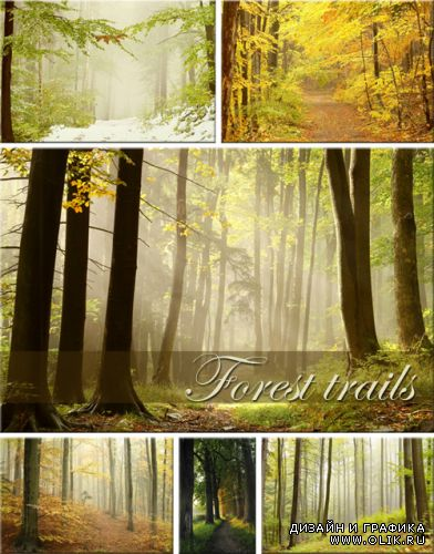 Forest trails - ClipArt