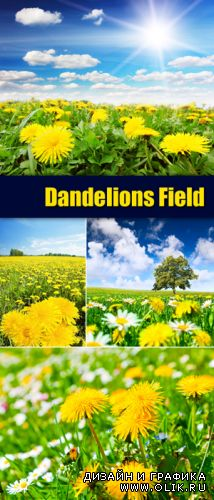 Stock Photo - Dandelions Field