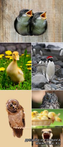 Stock Photo - Funny Birds