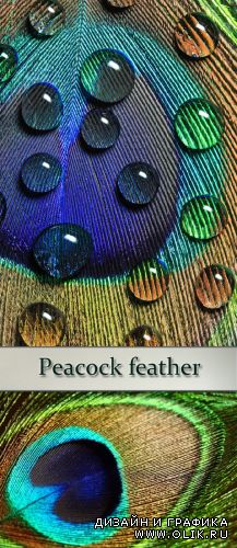 Stock Photo: Peacock feather 2