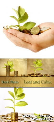 Stock Photo: Leaf and Coins