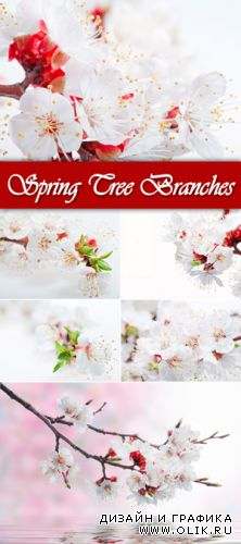 Stock Photo - Spring Tree Branches