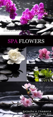 Stock Photo - Spa Flowers