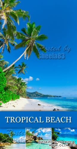 Stock Photo - Tropical Beach