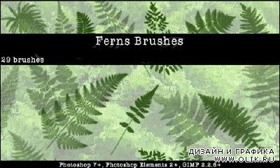 Ferns PHSP Brushes Set