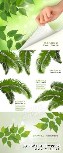 Green leaves & palm