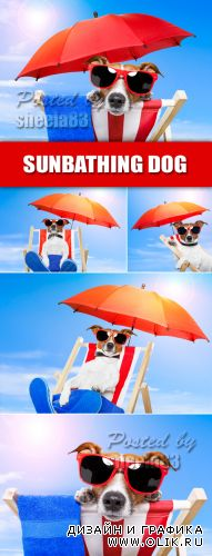 Stock Photo - Funny Sunbathing Dog