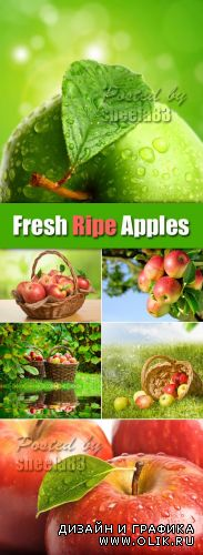 Stock Photo - Fresh Ripe Apples