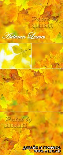 Stock Photo - Autumn Leaves Backgrounds 2