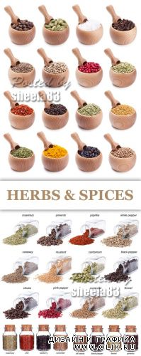 Stock Photo - Herbs & Spices 2