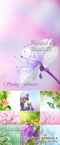 Stock Photo - Spring Flowers Cards 2
