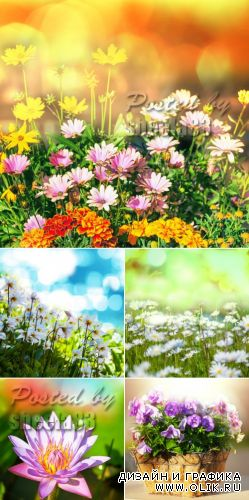 Stock Photo - Spring Flowers Cards 4