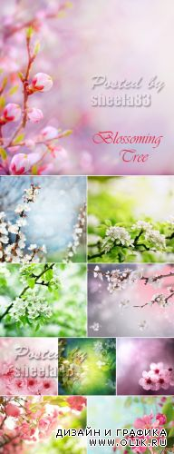 Stock Photo - Blossoming Spring Tree