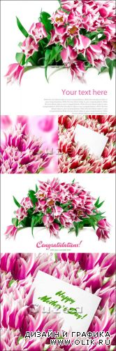 Stock photo - Розовые тюльпаны и карточки/  Pink tulips with card