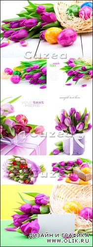 Сиреневые тюльпаны к пасхе - Stock photo - Lilac tulips and Easter eggs