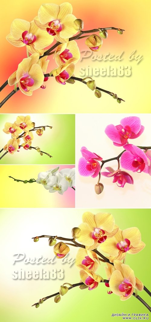 Stock Photo - Orchids