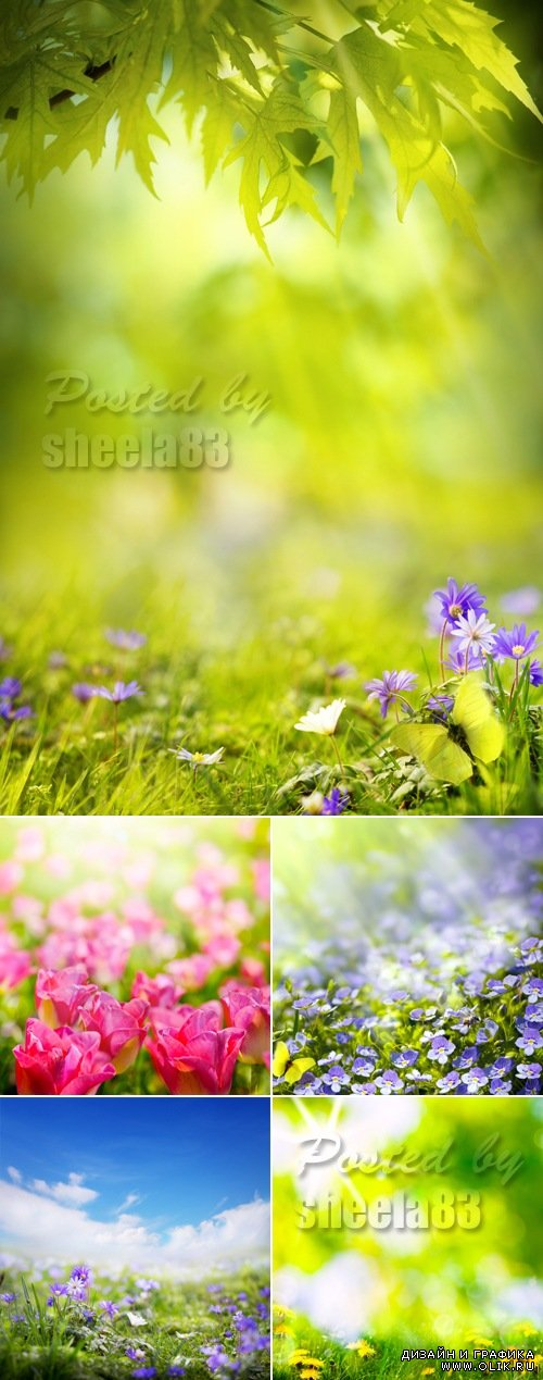Stock Photo - Summer Backgrounds with Flowers