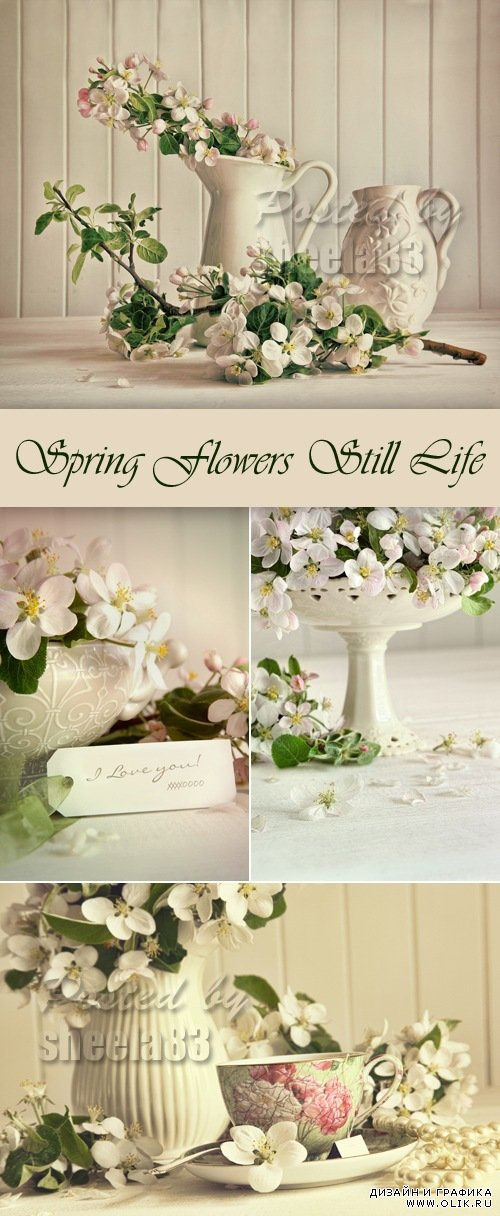 Stock Photo - Spring Flowers Still Life