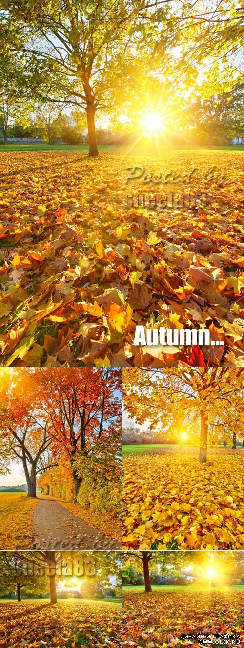 Stock Photo - Sunny Autumn Day