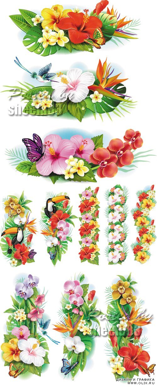 Tropical Flowers Banners, Borders Vector