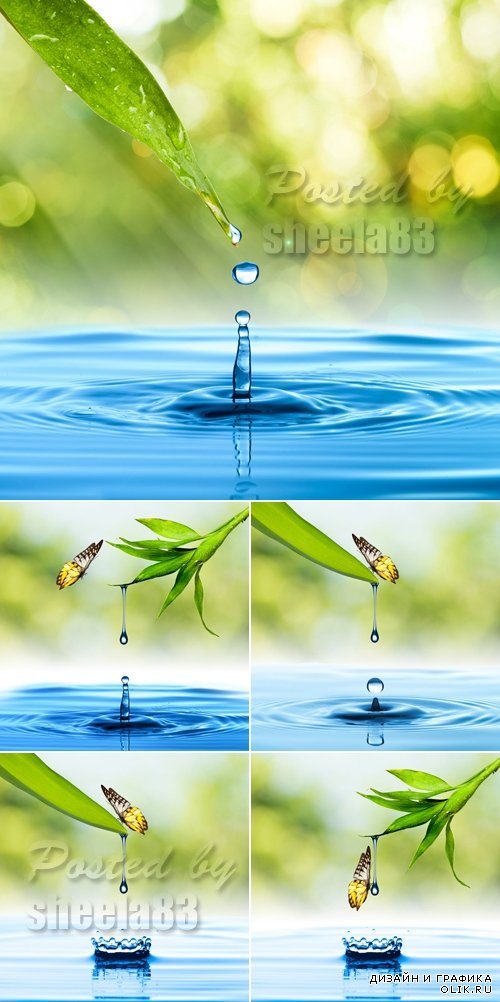 Stock Photo - Leaf & Water