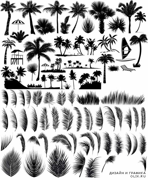 Vector Set - Palm and Leaves Shapes