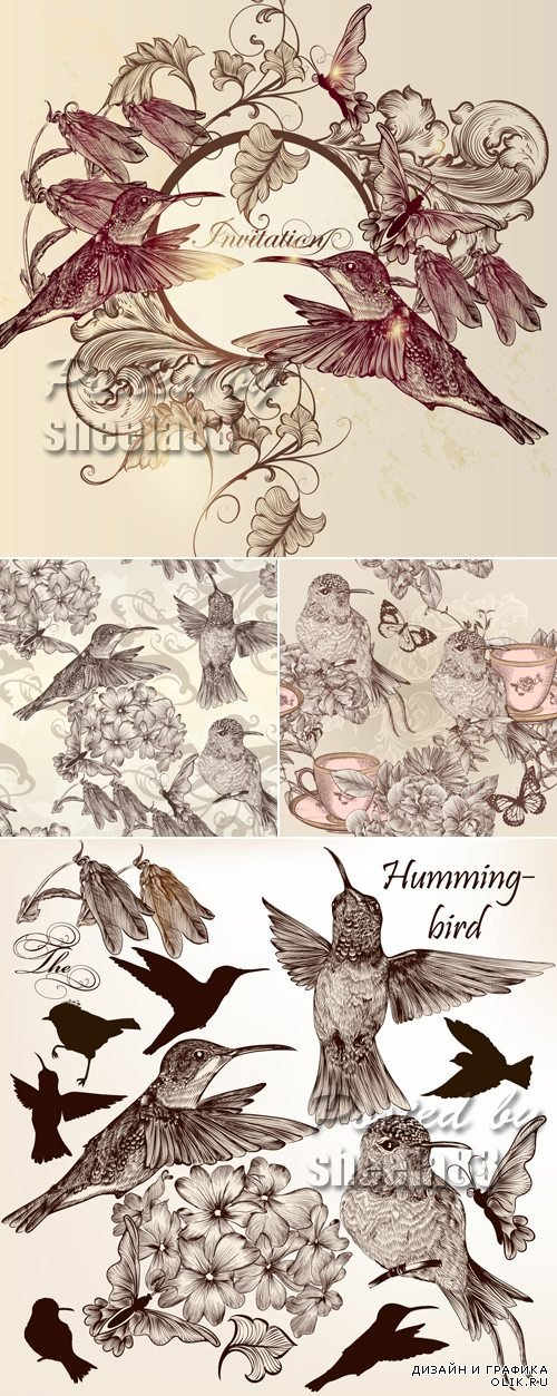 Hand Drawn Birds Backgrounds Vector