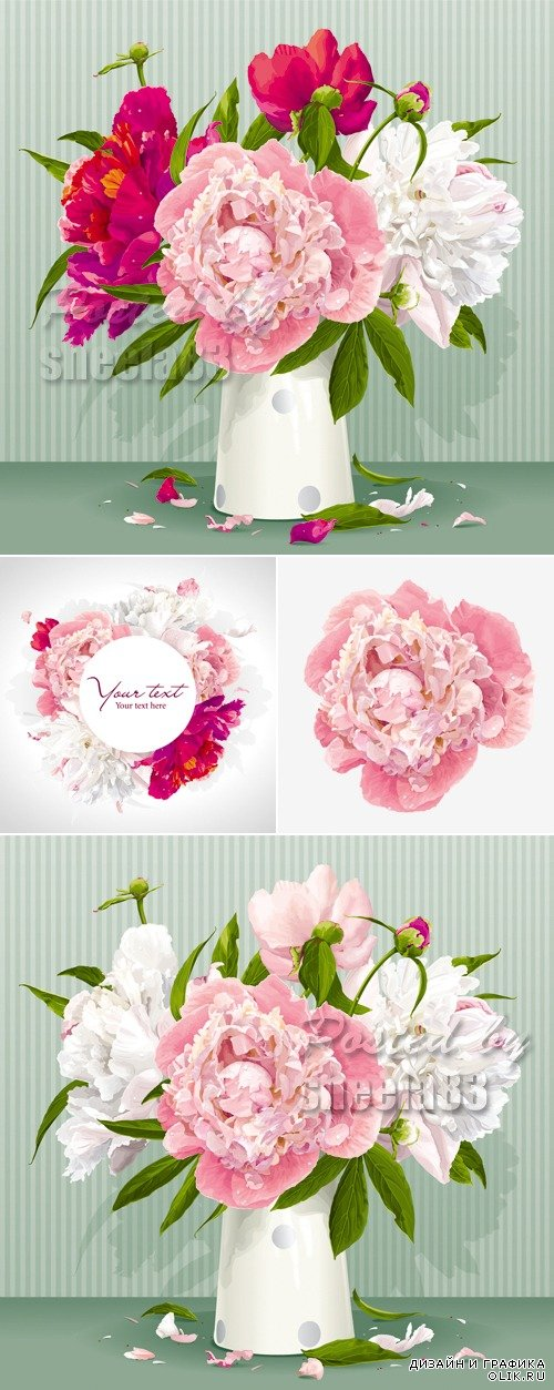 Peonies Flowers Vector