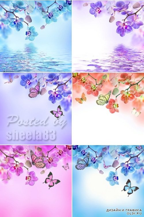 Stock Photo - Tropical Flowers
