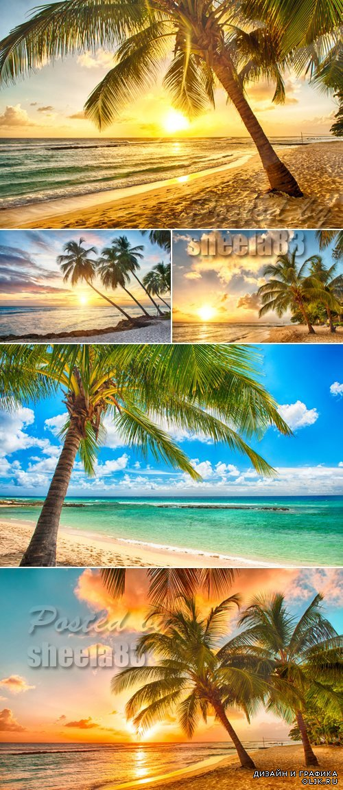 Stock Photo - Tropical Palms