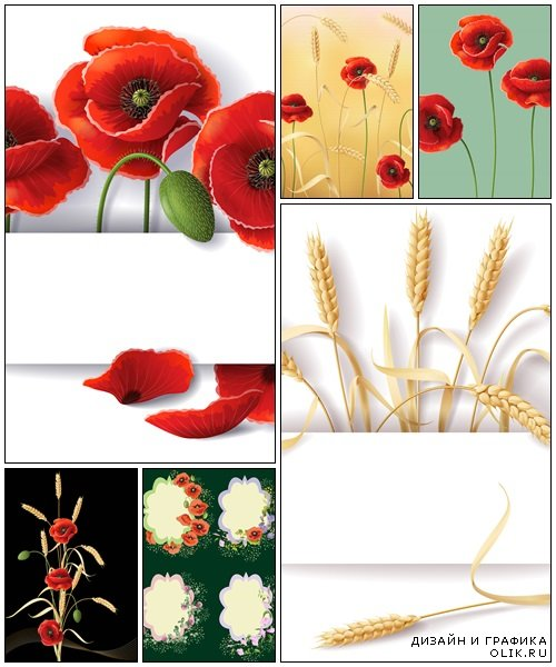 Wheat and poppy- vector stock