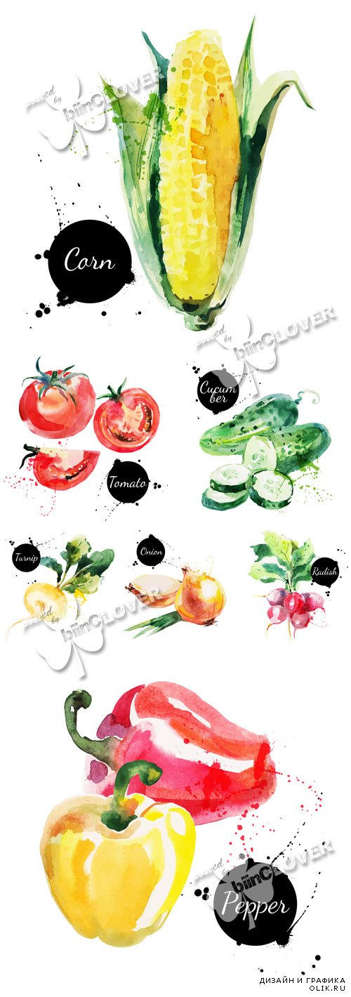 Fresh vegetables watercolor illustrations 0599