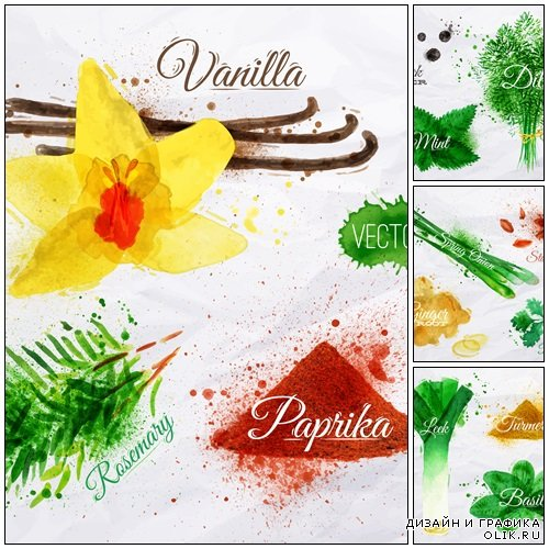 Spices herbs watercolor vanilla, rosemary, paprika - vector stock