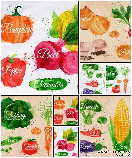 Vegetables watercolor radishes, onions, potatos - vector stock
