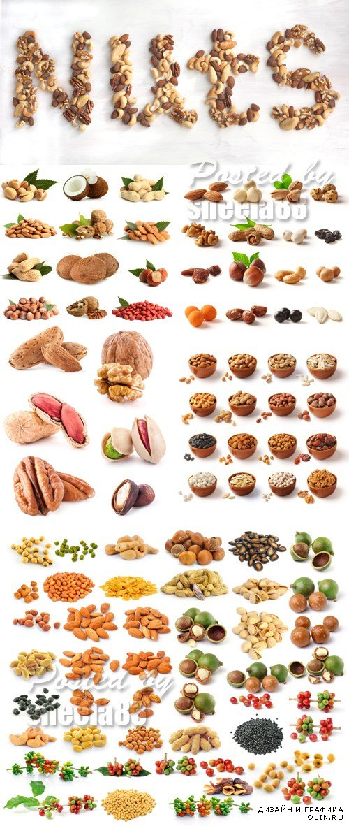 Stock Photo - Nuts Isolated