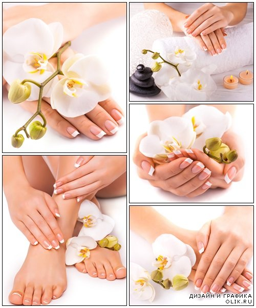 Beautiful french manicure with white orchid - Stock Photo