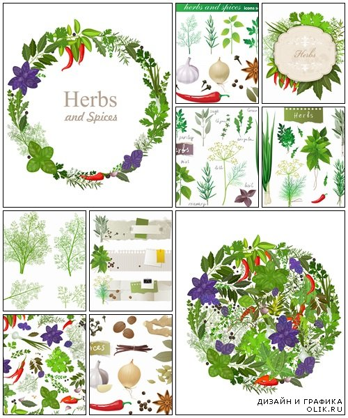 Herbs and spices on white  - vector stock
