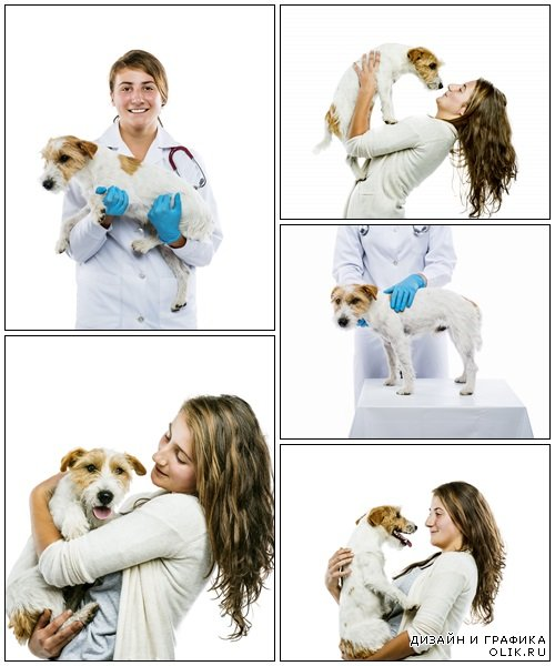 Female veterinarian examining dog isolated - Stock Photo