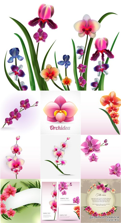 Realistic vector delicate orchids