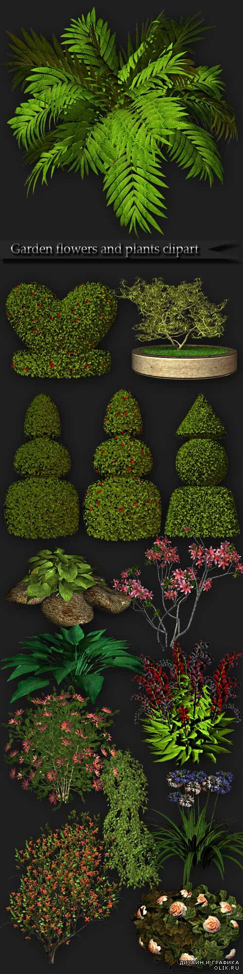 Garden flowers and plants clipart PNG