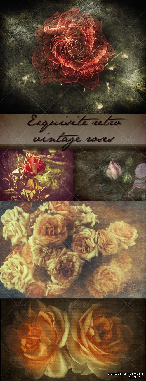 Exquisite retro vintage roses