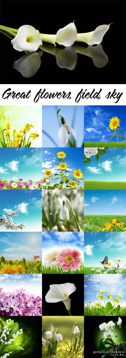 Great flowers, field, sky raster graphics