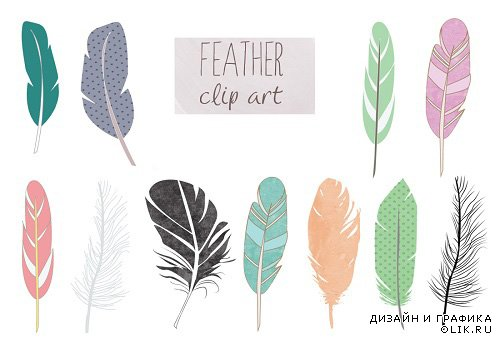 Feather Clip Art PNG