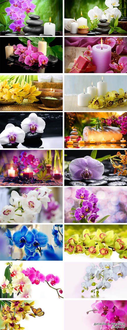 Stock Photo - Beautiful Orchids